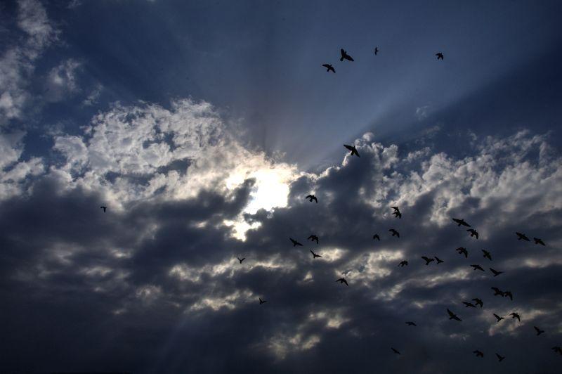 Birds fly in Delhi sky on a cloudy day.