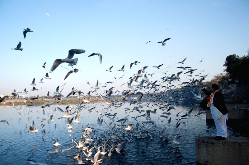 Migratory birds on the banks of Yamuna at Nigambodh Ghat in New Delhi, on Feb 6, 2015.