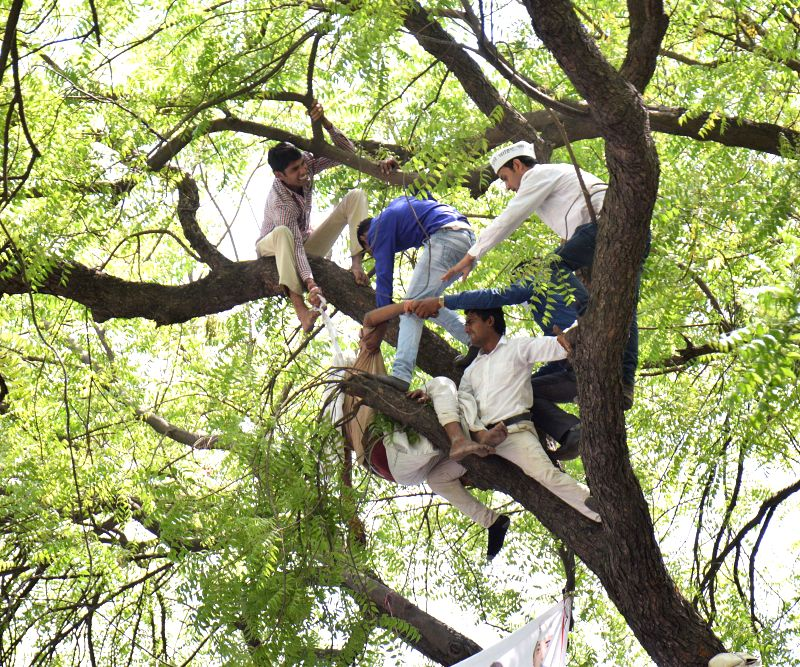 People rescue the farmer who attempted suicide by hanging himself from a tree at an AAP rally at Jantar Mantar,  in New Delhi, on April 22, 2015.