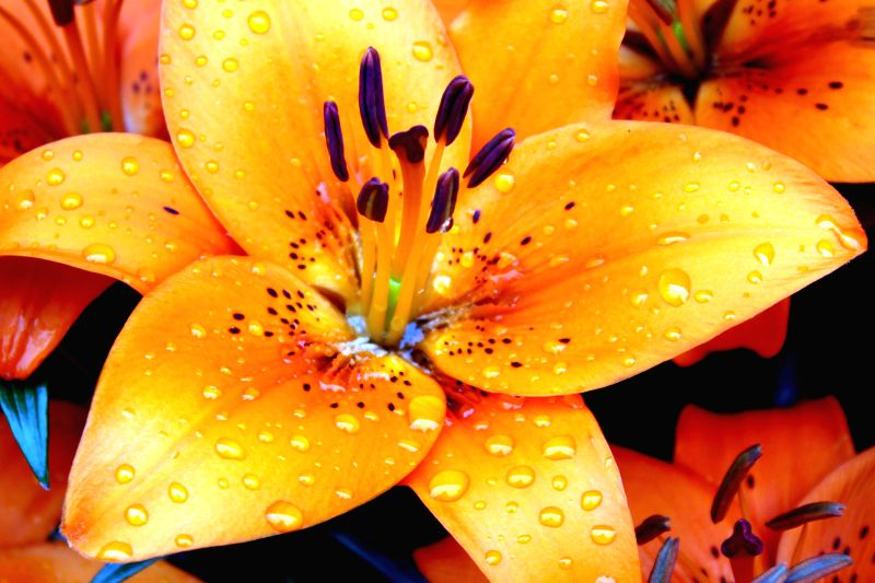 Raindrops on the petals of a flower at the Parliament in New Delhi, on March 2, 2015.