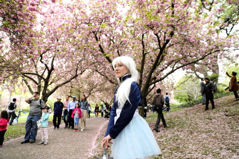 NEW YORK, April 30, 2017 - A girl dressed in cosplay costume poses for photos below cherry blossom trees in Brooklyn Botanic Garden in New York, the United States, on April 30, 2017. Cherry blossoms ...