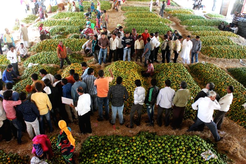 Oranges being sold at Kalmana wholesale market in Nagpur on Jan 31, 2018.