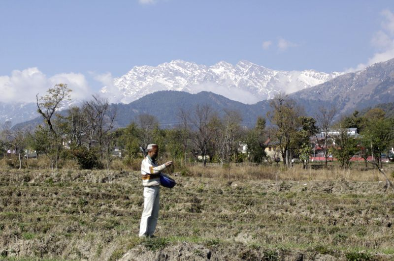 A farmer works on his fields at Palampur, Himachal Pradesh on Jan 18, 2015.
