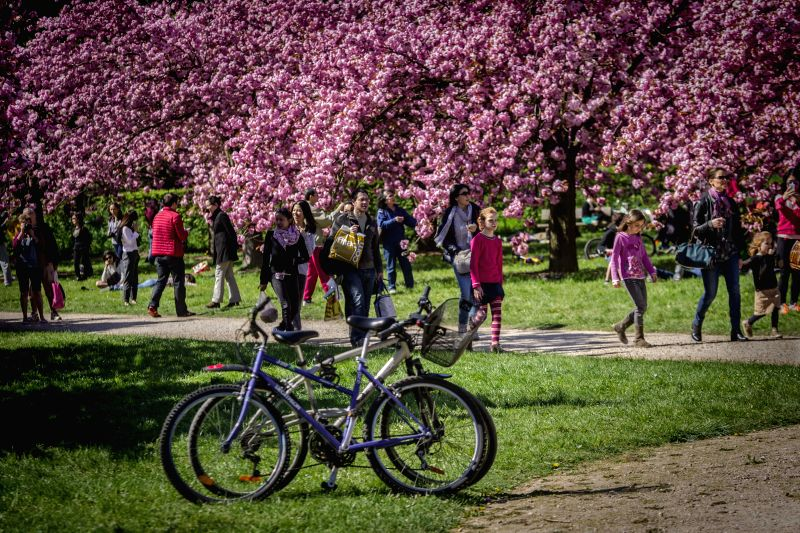 People walk past bikes in Paris, France, on April 19, 2015, three days ahead of the 46th World Earth Day.