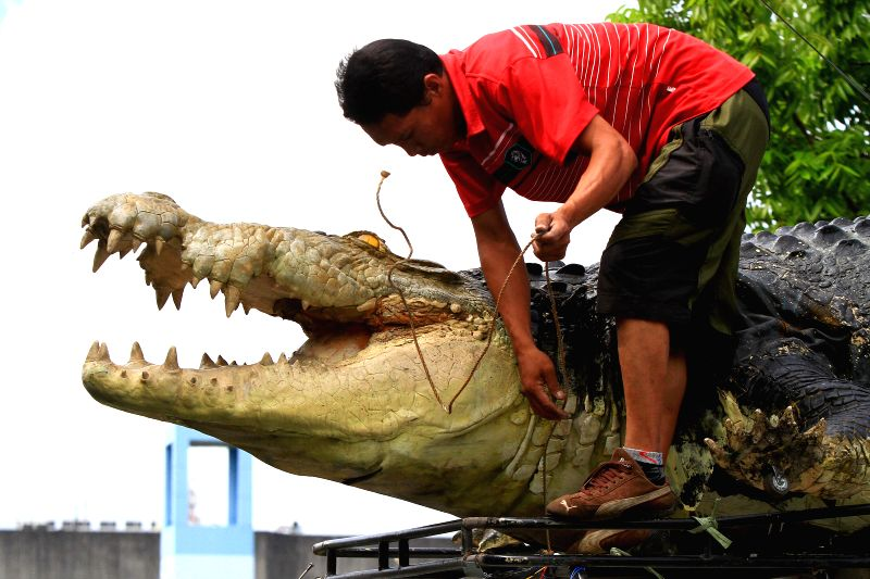 "A worker unloads ""Longlong"", a 21-foot robot crocodile from a truck at the Crocodile Park in Pasay City, the Philippines, July 5, 2014. The robot ..."
