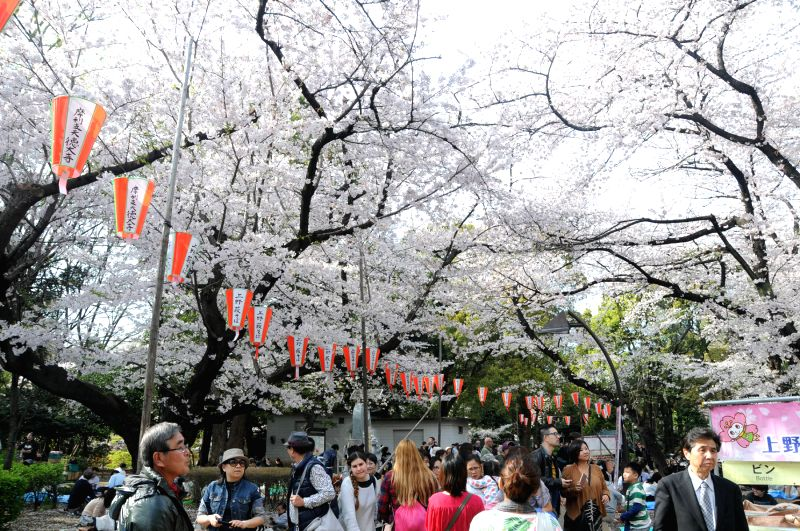 People enjoying cherry blossom Festival in Japan