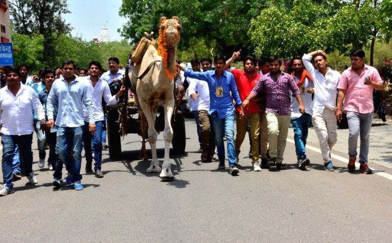 People participate in a camel rally after Rajasthan Government declared camel as the state animal in Jaipur on July 1, 2014.