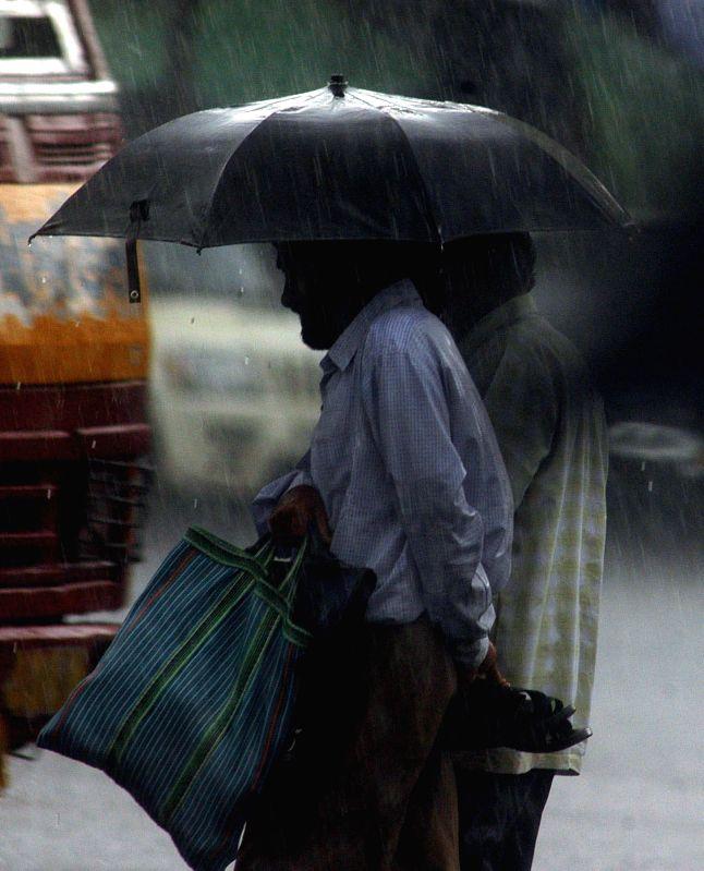 People use umbrellas as it rains in Kolkata on July 17, 2014.