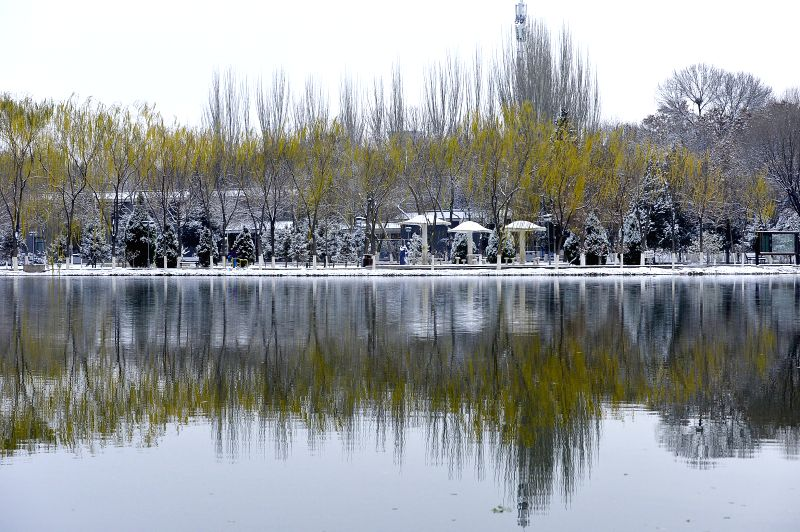 Photo taken on Nov. 24, 2015 shows the snow scenery at a park in Yinchuan, capital of northwest China's Ningxia Hui Autonomous Region. The city witnessed snowfall ...