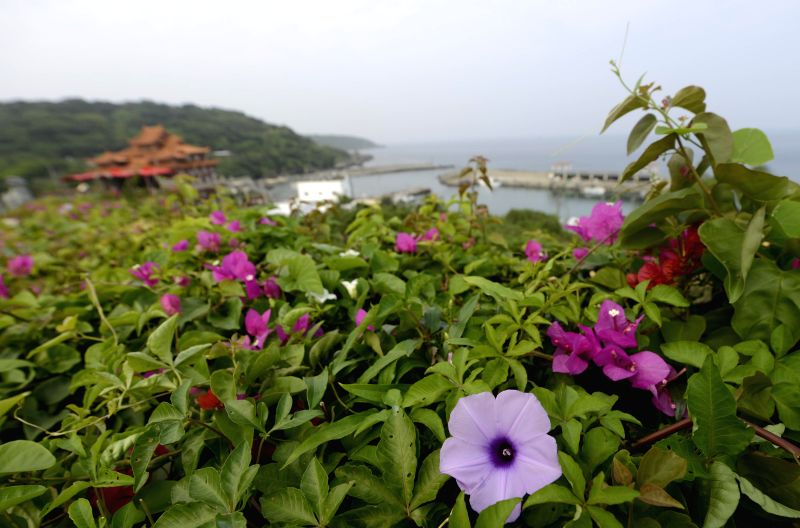 Photo taken on April 21, 2014 shows flowers in Liouciou Township in Pingtung County, southeast China's Taiwan. Liouciou township, which locates 8-9 nautical miles