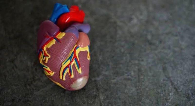 Post-COVID cardiac care is important: Doctor.(Photo:IANSLIFE)