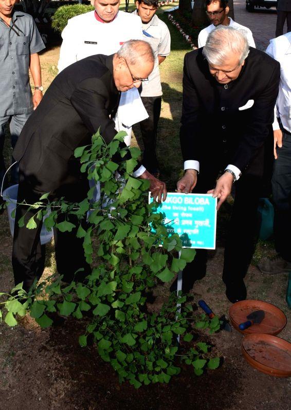 President Pranab Mukherjee plants a sapling of Ginkgo Biloba, one of the world's oldest living trees at Rajbhawan in Dehradun on May 6, 2017. Also seen Uttarakhand Governor KK Paul. - Pranab Mukherjee