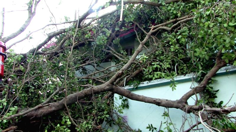 The trees that were uprooted in a storm that lashed several districts of Bihar late on Tuesday night (22nd April 2015) lie on the ground in Purnia, on April 23, 2015. At least 32 people have ...