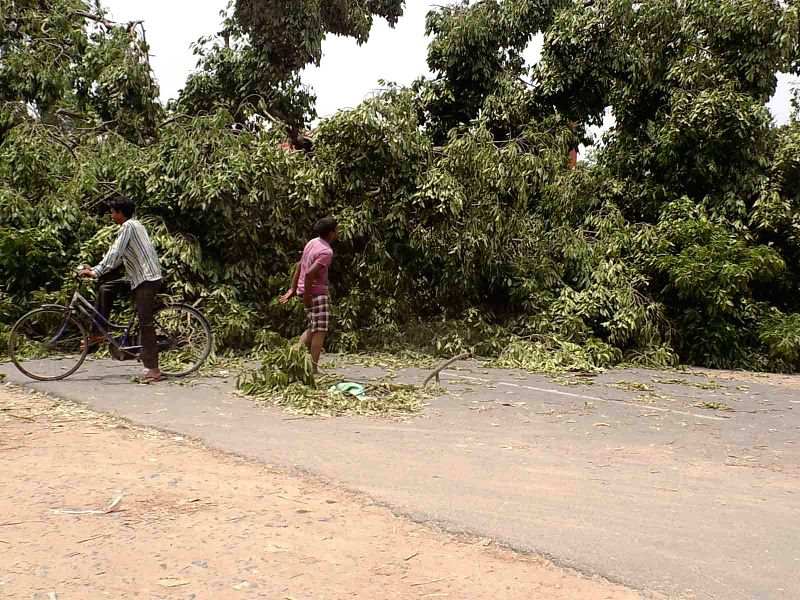 The trees uprooted in a storm that lashed several districts of Bihar late on Tuesday night (22nd April 2015) block a road in Purnia on April 22, 2015. At least 32 people have been killed and ...