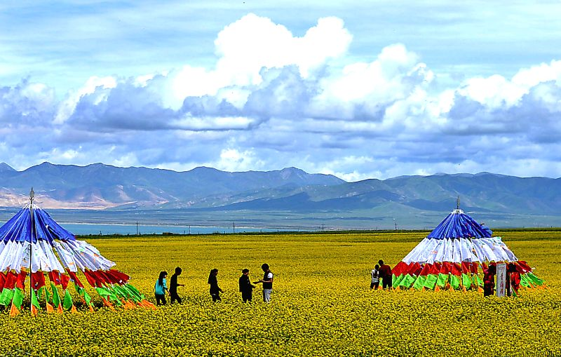 Tourists visit the rape flowers field by the Qinghai Lake, northwest China's Qinghai Province, July 23, 2014.