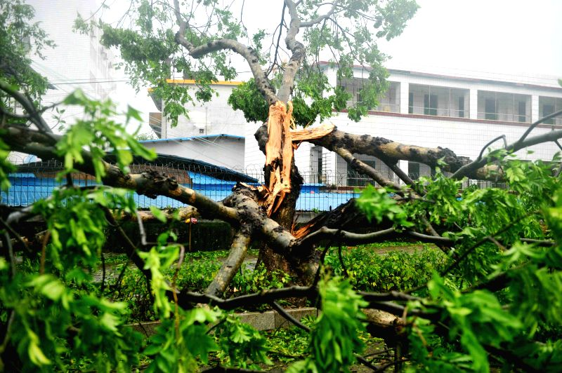 Photo taken on July 19, 2014 shows a tree uprooted due to the super typhoon Rammasun in Qinzhou City of Guangxi Zhuang Autonomous Region. Typhoon Rammasun, the ...