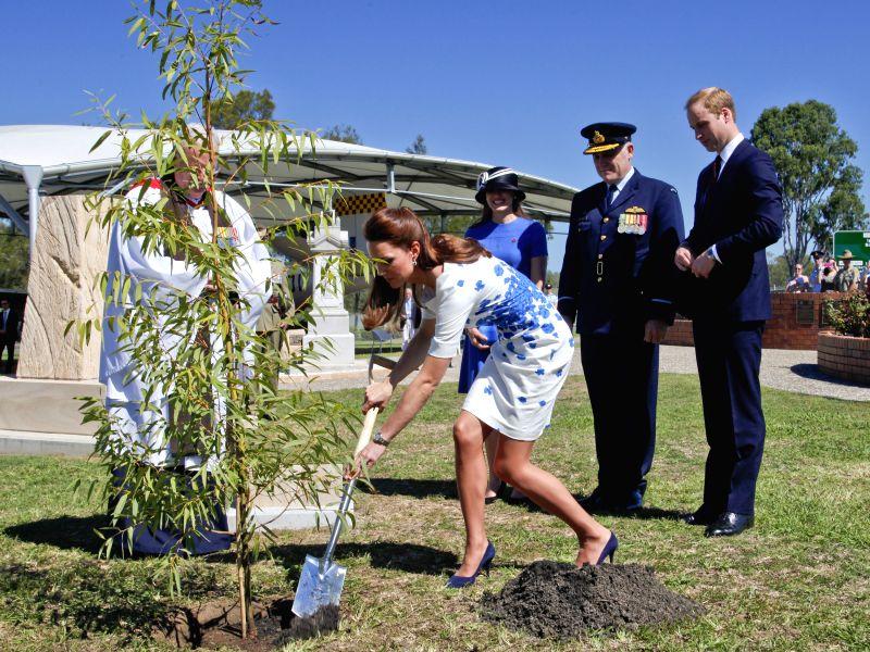 British Prince William's wife Kate plants a Queensland native ??Plunkett Mallee?? tree at the RAAF Base Amberley, near Brisbane, Australia, April 19, ...