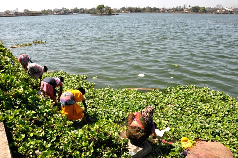 Ranchi Municipal Corporation (RMC) workers busy cleaning Ranchi Lake, on March 11, 2015.