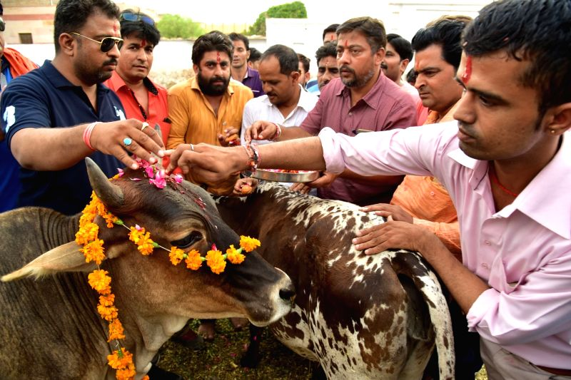 Right-wing Hindu activists worship cows in Bikaner on May 31, 2017.