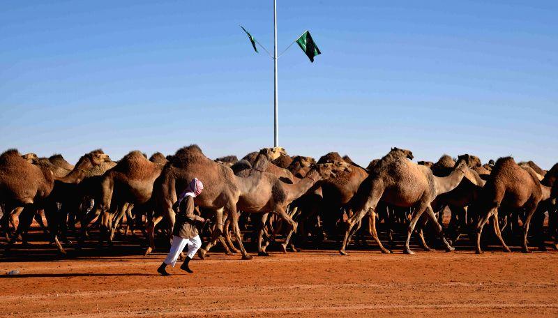 RIYADH, Jan. 28, 2018 - A Saudi man leads his camels during a camel beauty contest in Rumah, some 160 kilometers east of Riyadh, capital of Saudi Arabia, on Jan. 28, 2018. The annual King Abdulaziz ...