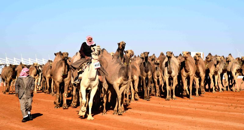 RIYADH, Jan. 28, 2018 - Saudi men lead camels during a camel beauty contest in Rumah, some 160 kilometers east of Riyadh, capital of Saudi Arabia, on Jan. 28, 2018. The annual King Abdulaziz Camel ...