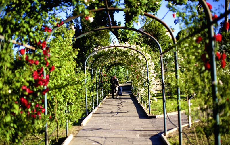 ROME, May 4, 2017 - A couple kisses under the pergola inside Rome Rose Garden in Rome, Italy, on May 2, 2017. Rome Rose Garden is located at the foot of Aventine Hill, hosting about 1,100 varieties ...