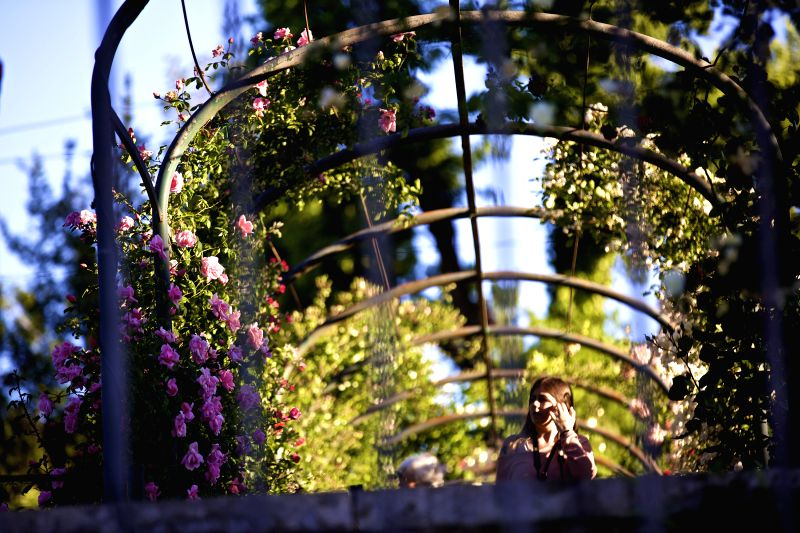 ROME, May 4, 2017 - A woman appreciates the roses under the pergola inside Rome Rose Garden in Rome, Italy, on May 3, 2017. Rome Rose Garden is located at the foot of Aventine Hill, hosting about ...