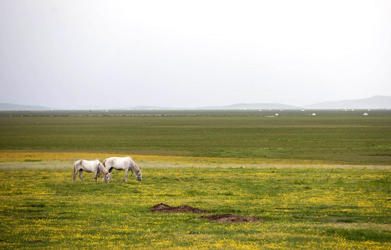 Photo taken on July 2, 2014 show the scenery of Re'er grassland in Ruoergai County, southwest China's Sichuan Province.