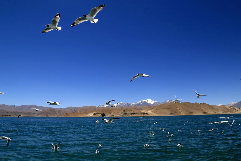 Birds fly over the Lake Palgon in Rutog County, southwest China's Tibet Autonomous Region, July 1, 2014. The wetland of the Lake Palgon lies on Tibet plateau, ...