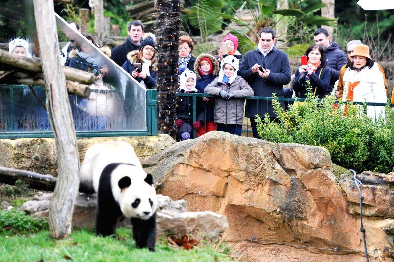 "SAINT-Visitors watch the male giant panda ""Yuan Zi"", the father of the panda baby ""Yuan Meng"" in Zooparc de Beauval, Saint-Aigan, France on Jan. ..."