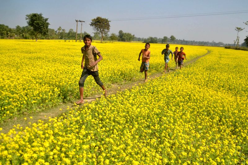 Children play in blooming mustard fields of Samaguri in Nagaon district of Assam.