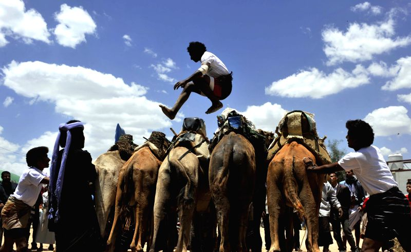 A Yemeni man jumps over camels during the One-Week Sanaa Summer Festival, in Sanaa, Yemen, on Aug. 28, 2014. Yemen launched the seventh Sanaa Summer Festival in the ..