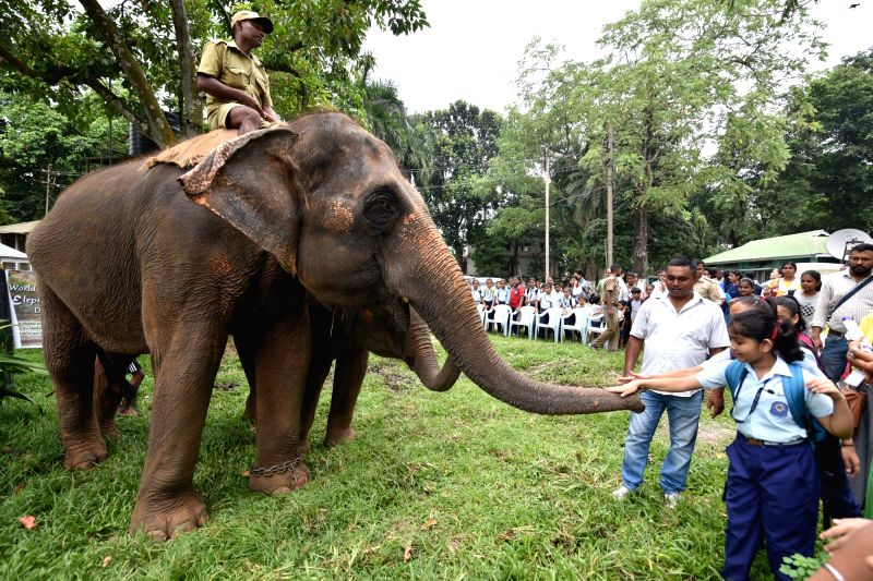 School children caress the trunk of an elephant during their visit to the Assam State Zoo cum Botanical Garden in Guwahati on Aug 12, 2018. August 12 is observed as World Elephant Day.