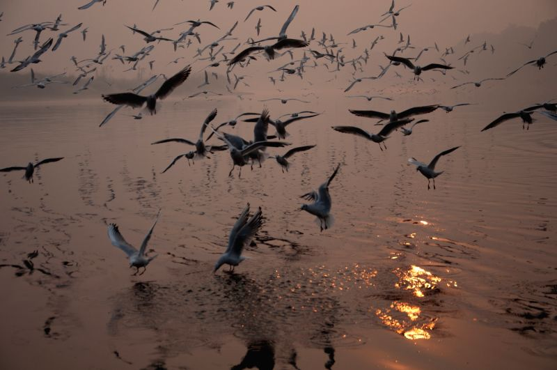 Seagulls arrive in Delhi.