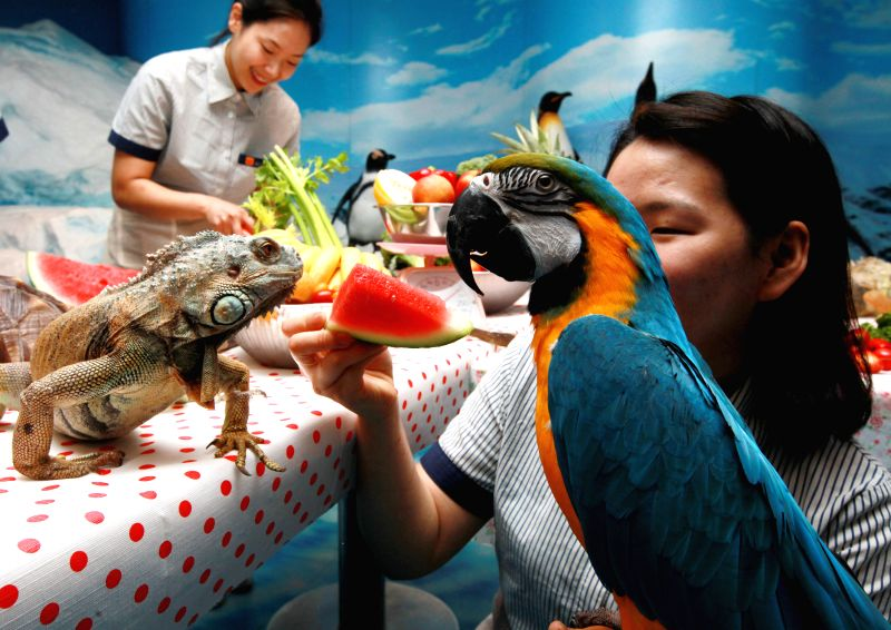 A zookeeper feeds a scarlet macaw and an iguana with a piece of watermelon to help them escape the summer heat at the 63 Seaworld in Seoul, South Korea, July 16, ...