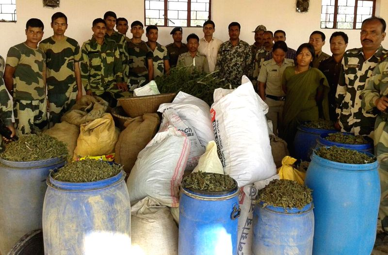 BSF personnels poses with ceased Bangladesh bound marijuana worth Rs 20 lakh in Sepahijal district of Tripura on Feb. 3, 2015.