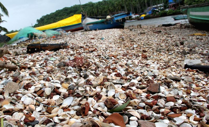 Shells spread across Nerul beach in Goa on June 22, 2014.