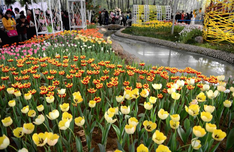 Citizens view the blooming tulips at Shijiazhuang botanical garden in Shijiazhuang, capital of north China's Hebei Province, April 6, 2015.  The tulips here ...