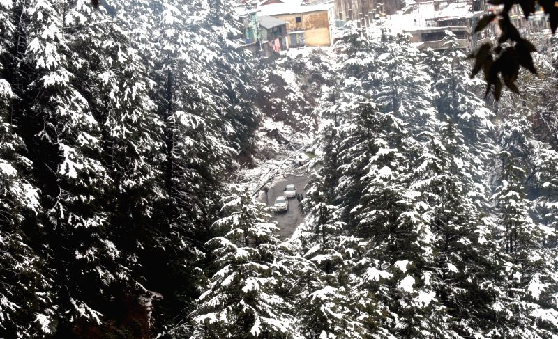 Snow clad trees after fresh snowfalls in Shimla on Dec 15, 2014.