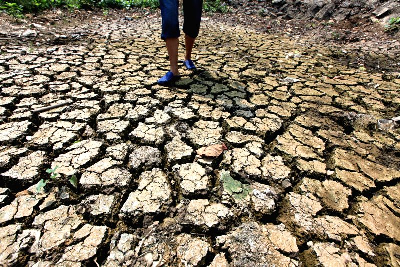 Photo taken on July 31, 2014 shows a dried-up land at Xujia Village of Tanshan Town, Yun County, Shiyan City, central China's Hubei Province. Lingering drought in ...