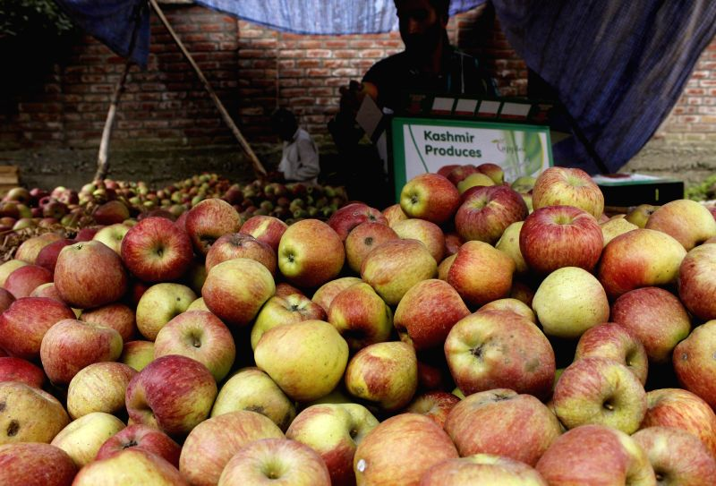 Shopian: Farmers pack apples before exporting them to foreign countries in Shopian district of Jammu and Kashmir on Nov 18, 2014.