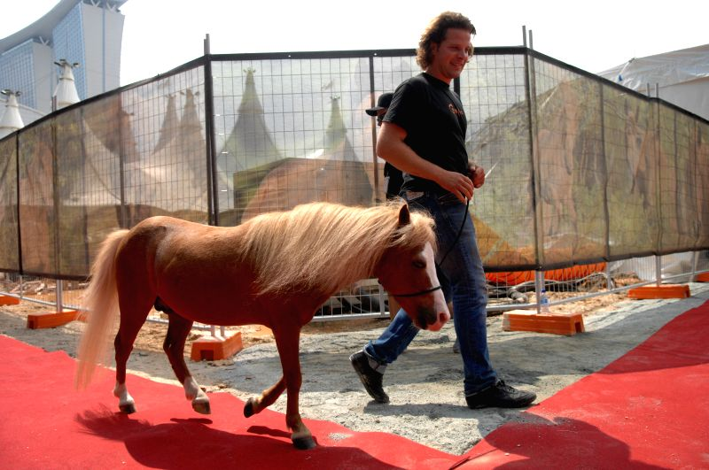 "A man takes a horse of the show ""Cavalia"" to meet media for the first time in Singapore, Aug. 4, 2014.  ""Cavalia"" is to be shown on Aug. 12  in"