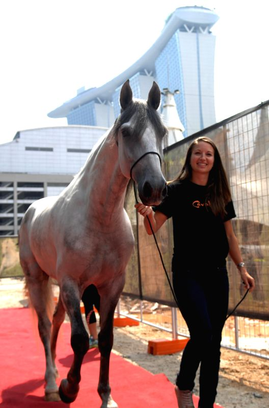 "A woman takes a horse of the show ""Cavalia"" to meet media for the first time in Singapore, Aug. 4, 2014.  ""Cavalia"" is to be shown on Aug. 12  ."