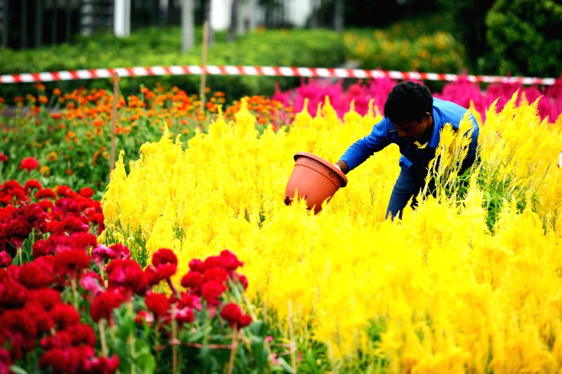 A gardener transplants flowers into the garden as part of the celebration of the coming Lunar New Year in Singapore's Istana Park on Feb. 11, 2015. (Xinhua/Then ..