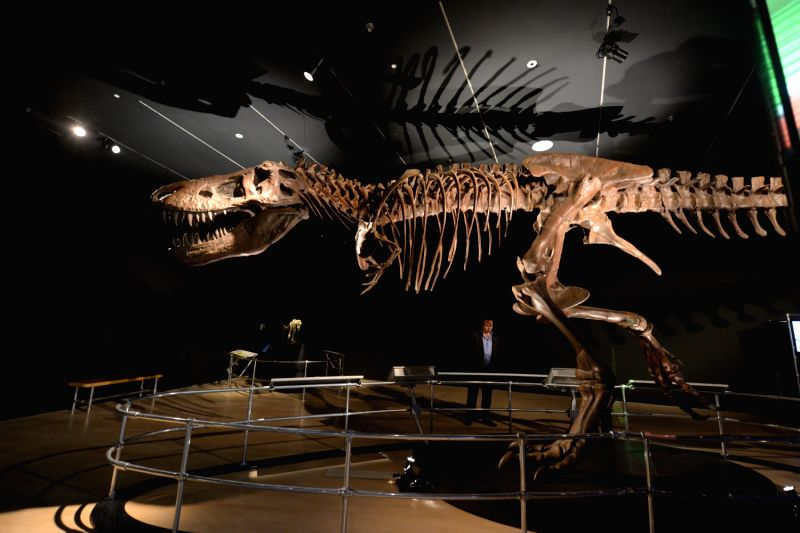 World's biggest Tyrannosaurus rex found by Canadian paleontologists