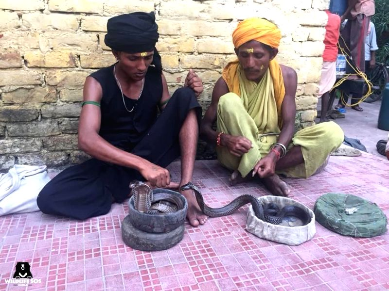Snake charmers in Mathura's Sri Krishna Janam Bhoomi area on Aug 8, 2018. Ahead of the Naag Panchmi festival next week, Forest Department officials have seized 21 snakes from snake charmers ...