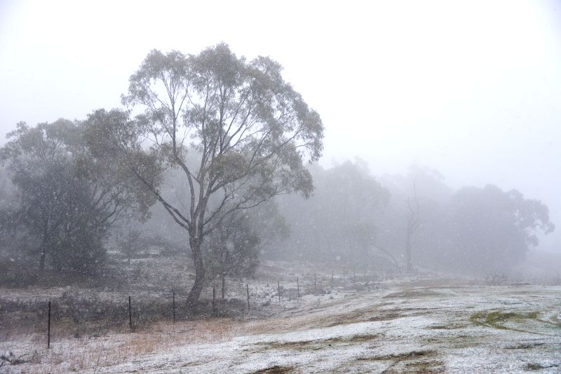 Snow falls on Mount Ainslie, a 843-meter hill in Canberra, Australia, Aug. 12, 2015. Australia's capital city Canberra is expected to freeze while other major ...