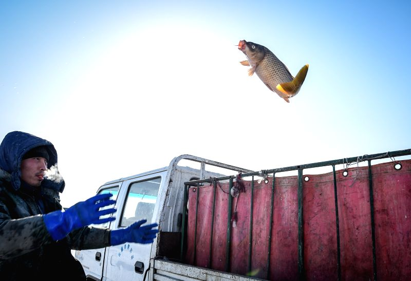 A fisherman throws fish onto a truck during an ice fishing event in the Chagan Lake in Qian Gorlos Mongolian Autonomous County, northeast China's Jilin Province, ...