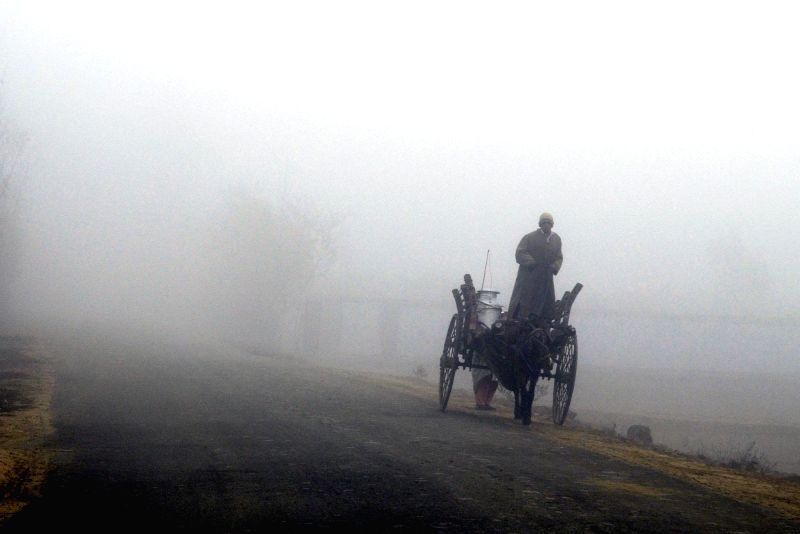 A horse-cart moves through dense fog in Sopore of Jammu and Kashmir's Baramulla district on Nov 21, 2014.