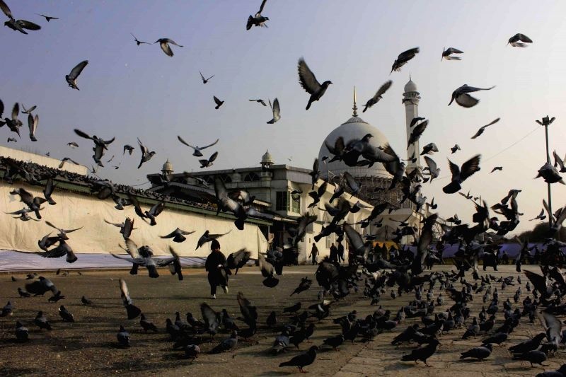 A young boy chases pigeons in front of the Hazratbal Shrine in Srinagar, on Jan 4, 2015.